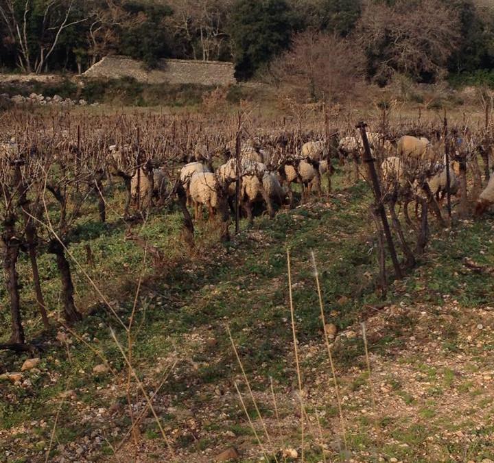 AgroPastoralisme et transhumance sur les terres du domaine